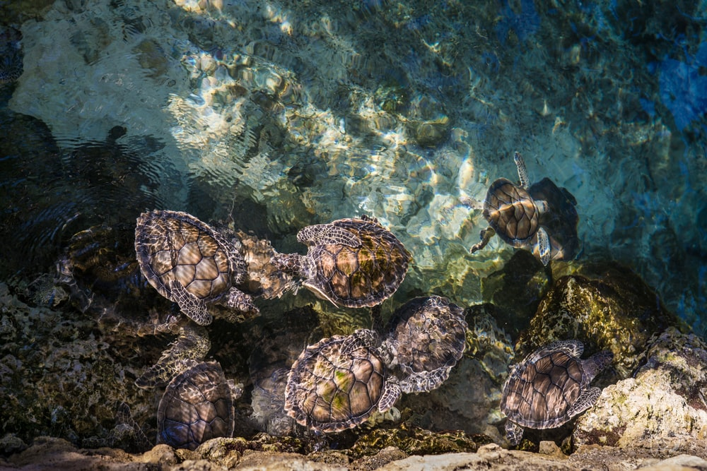 turtles on body of water