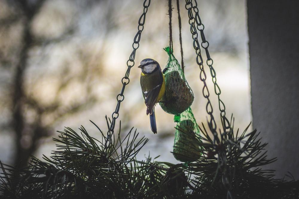 bird perching on hanging decor