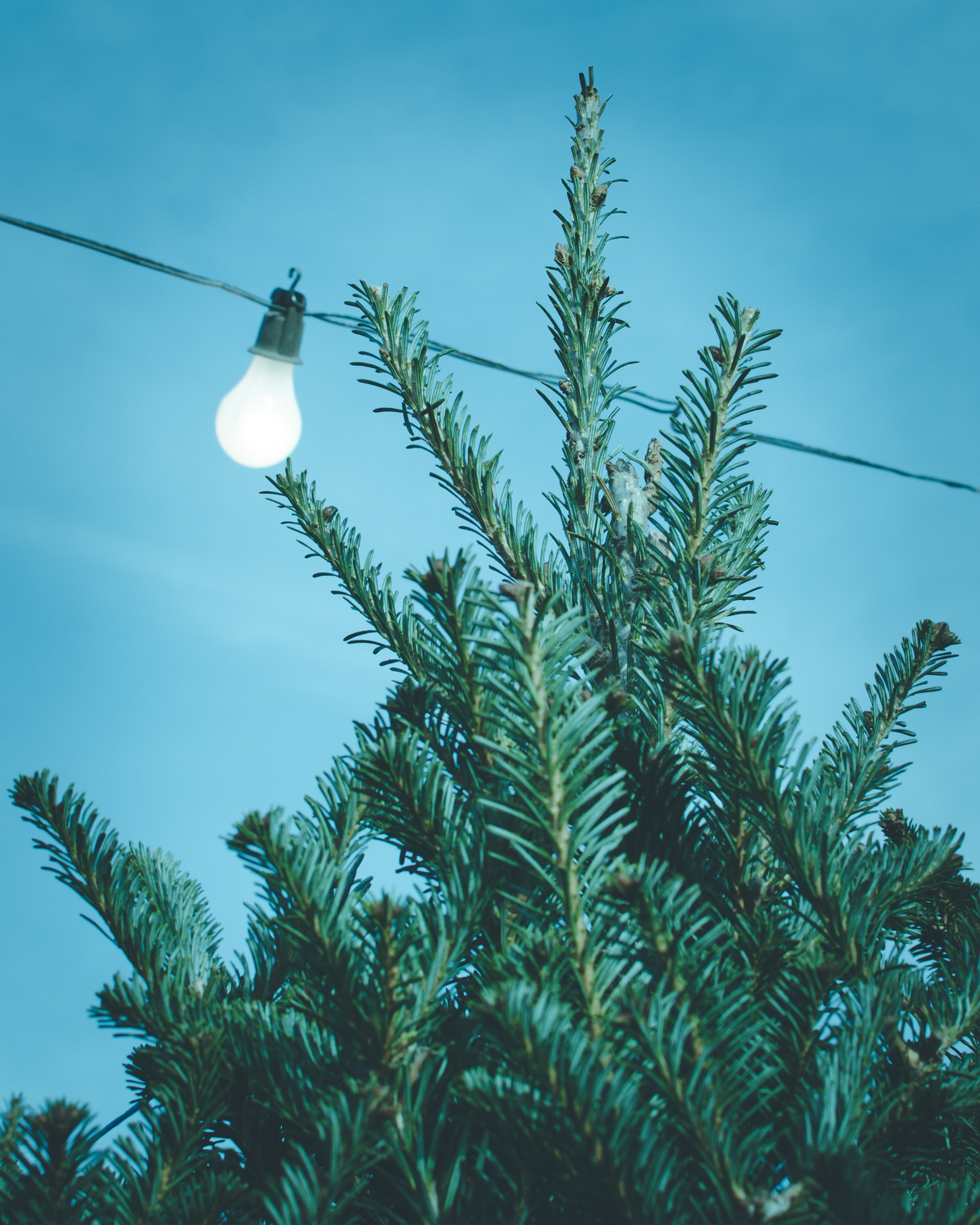 green leafed tree near light bulb