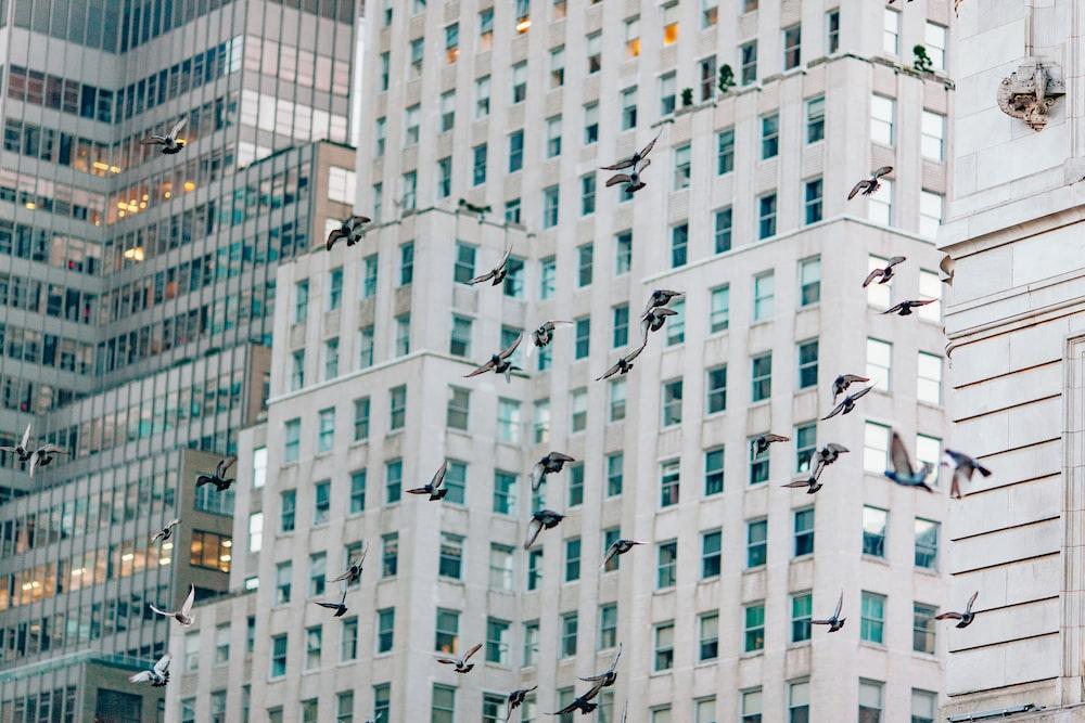 flock of birds under the sky