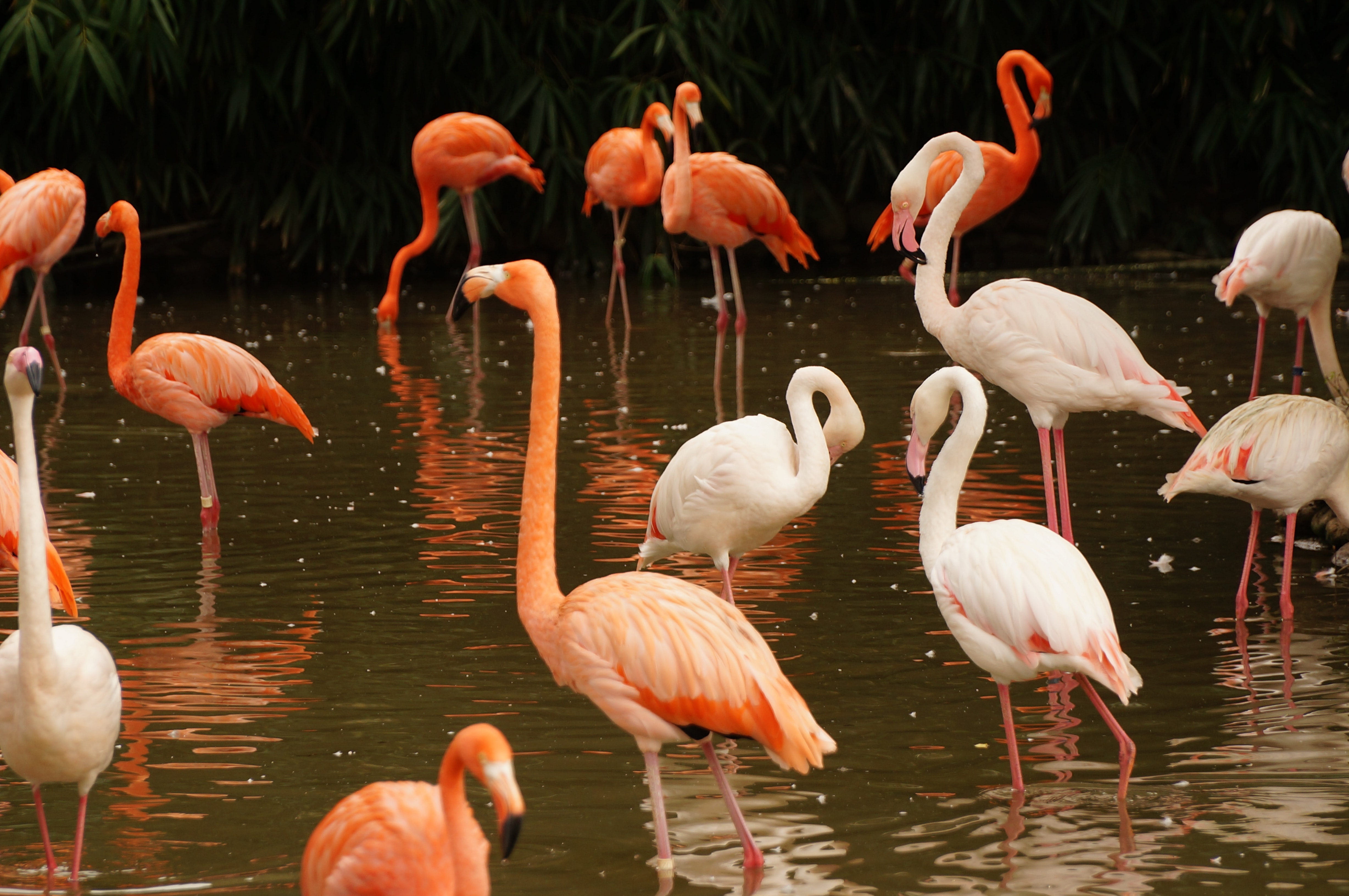 white and pink flamingos on body of water during daytime