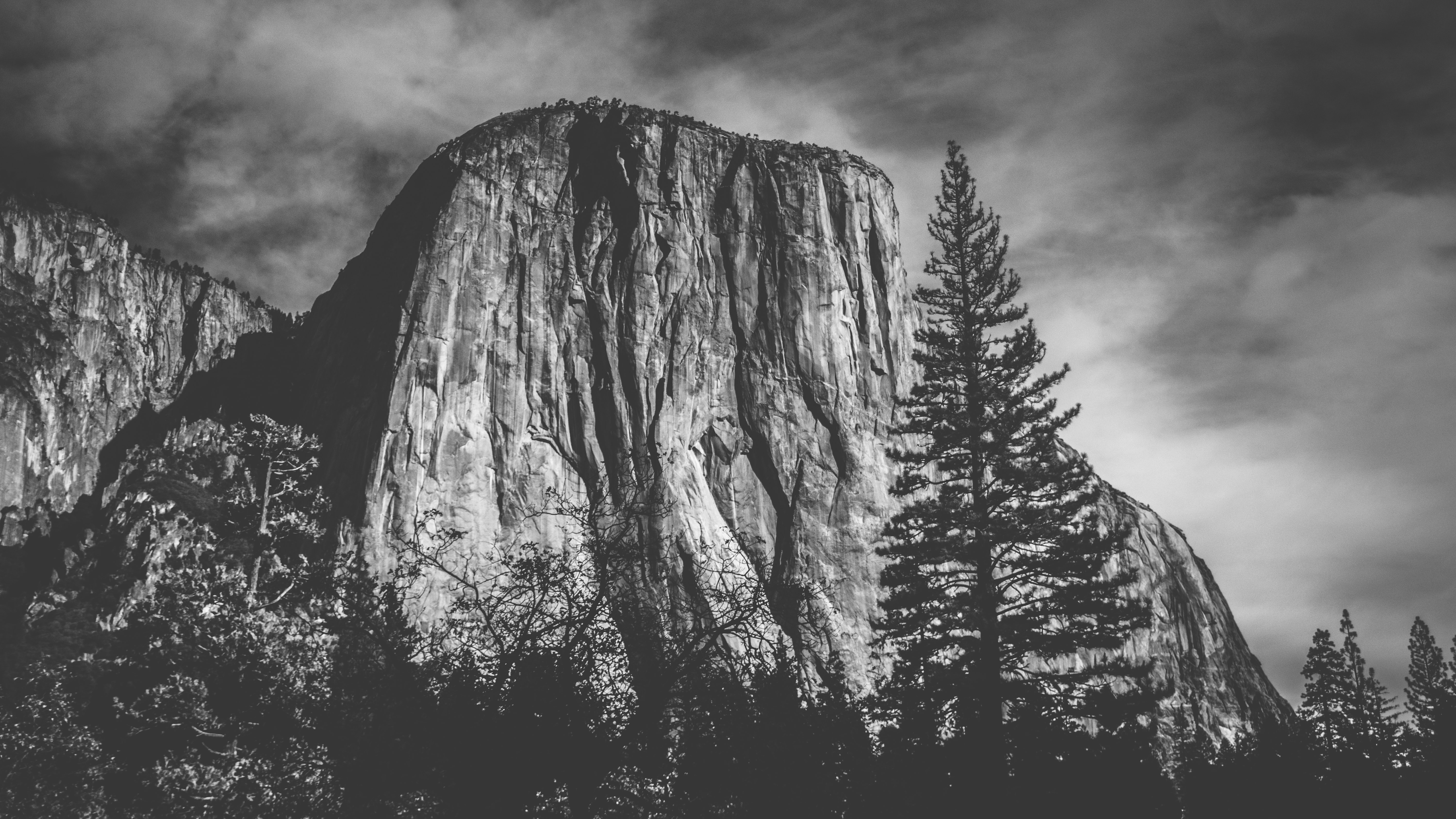 Black and white shot of El Capitan rock in Yosemite Park with trees in front