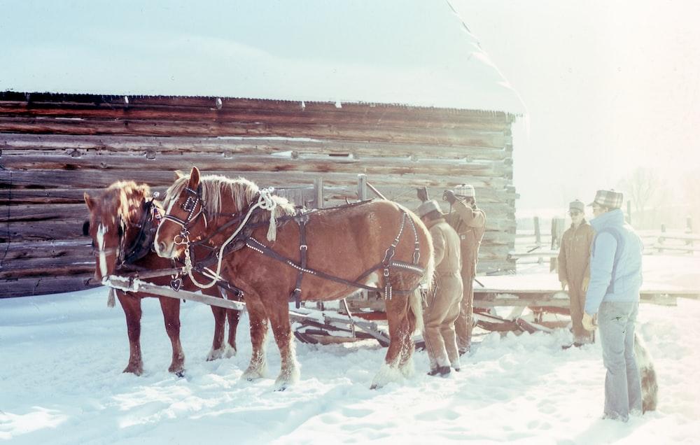 four men near two brown horses