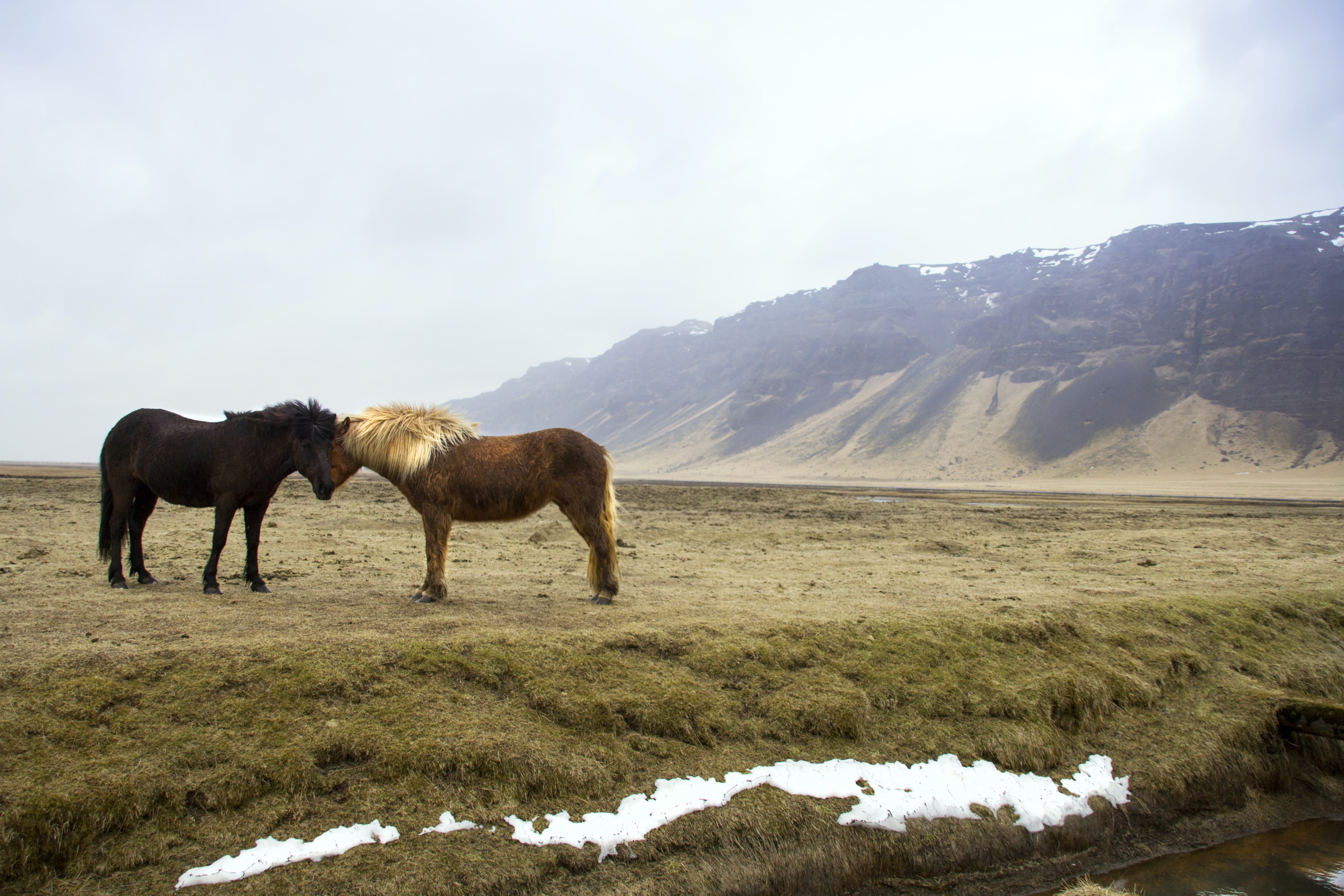 black and brown horses standing on green grass field across mountain