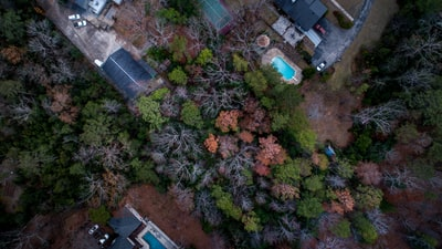 aerial photography of buildings surrounded by trees at daytime alabama zoom background