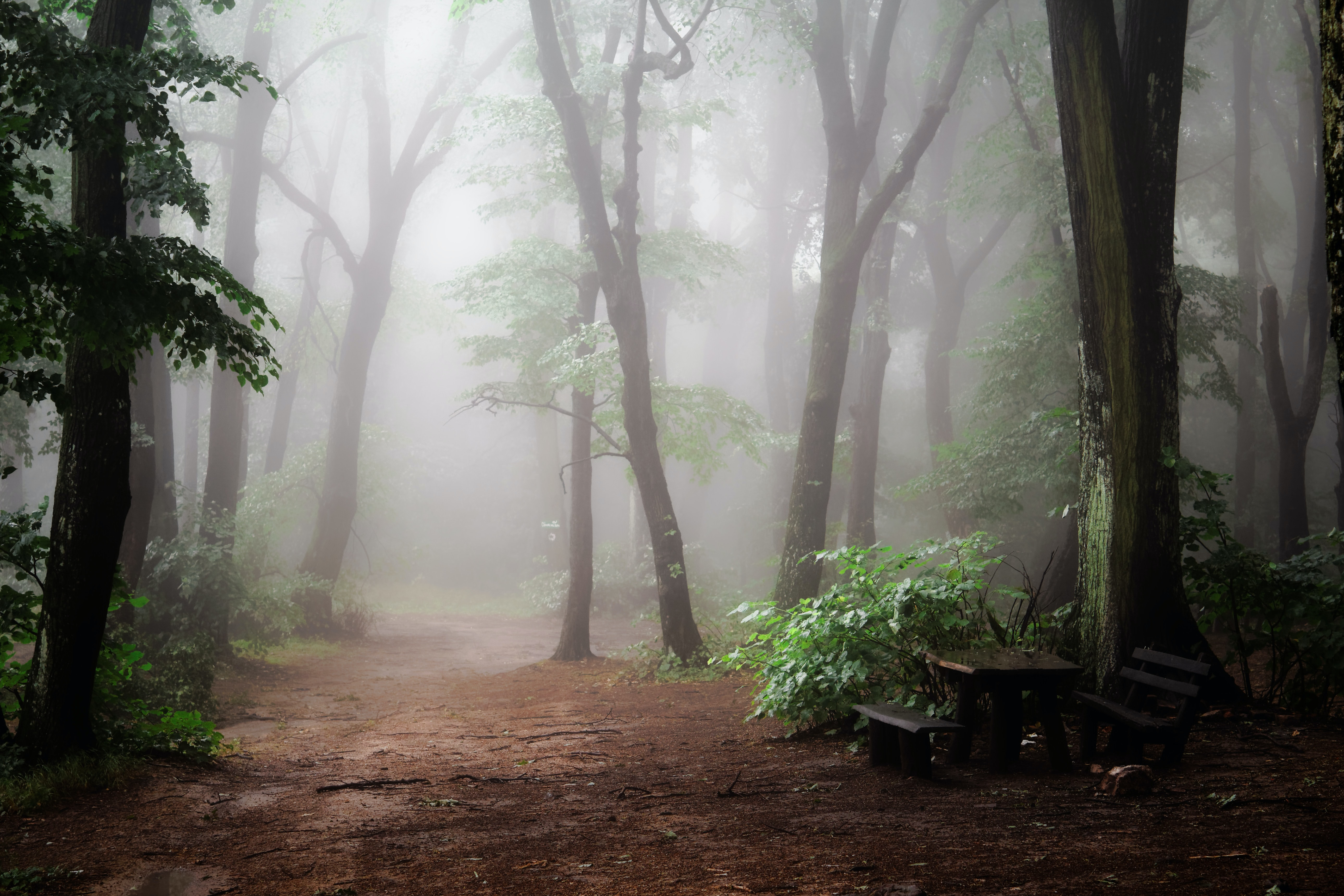 Misty and mystical isolated forest scene in Fruška Gora