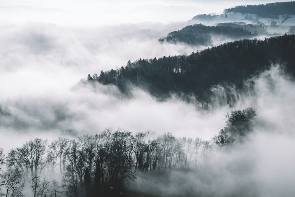 bird's eye view photography of trees and mountains with fog