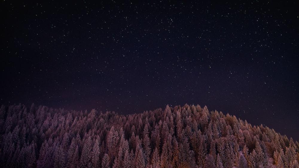 landscape photo of trees