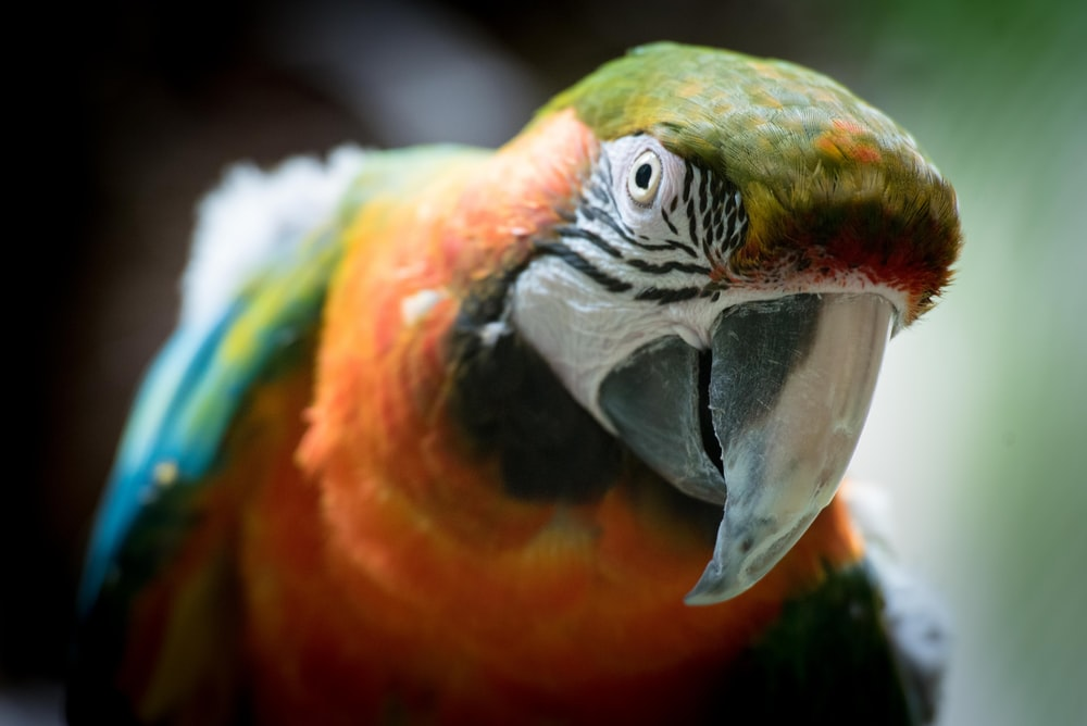 Macaw Pictures [HD] | Download Free Images on Unsplash