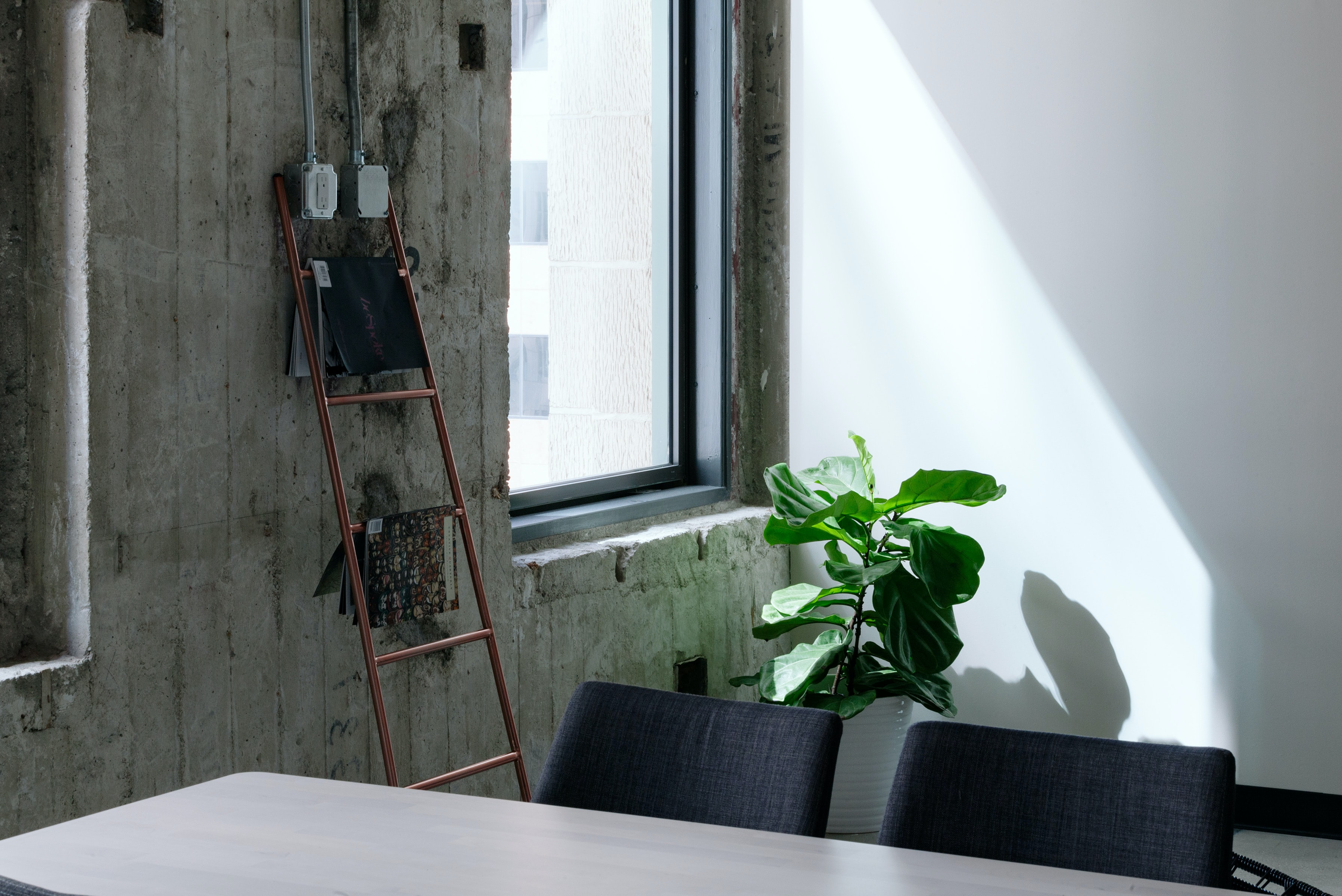 A large potted plant in the corner of an office