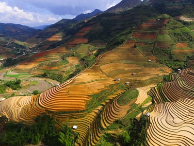 rice terraces during daytime vietnam teams background