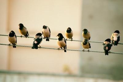 ten birds sits on wire line zoom background