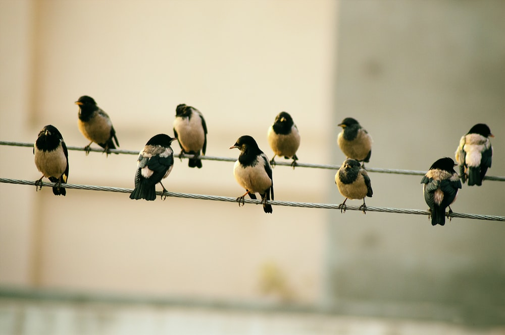 ten birds sits on wire