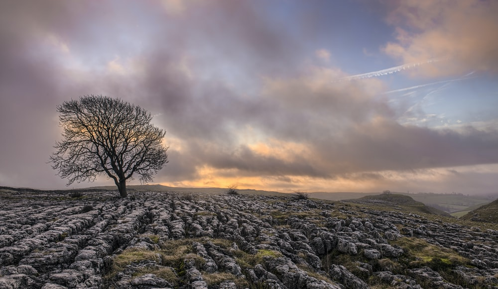 bare tree on field under grey clouds