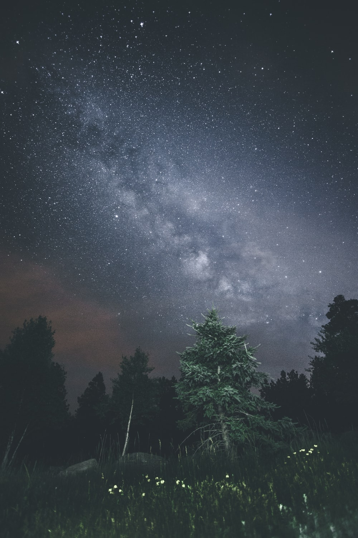 photo of pine tree