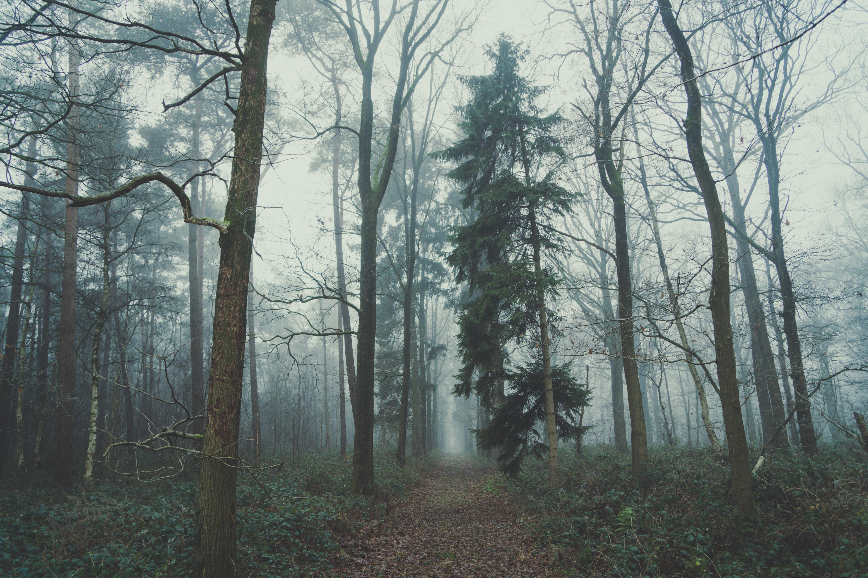 An empty leaf-covered trail through a foggy forest