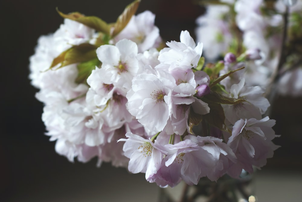 white-and-pink petaled flowers
