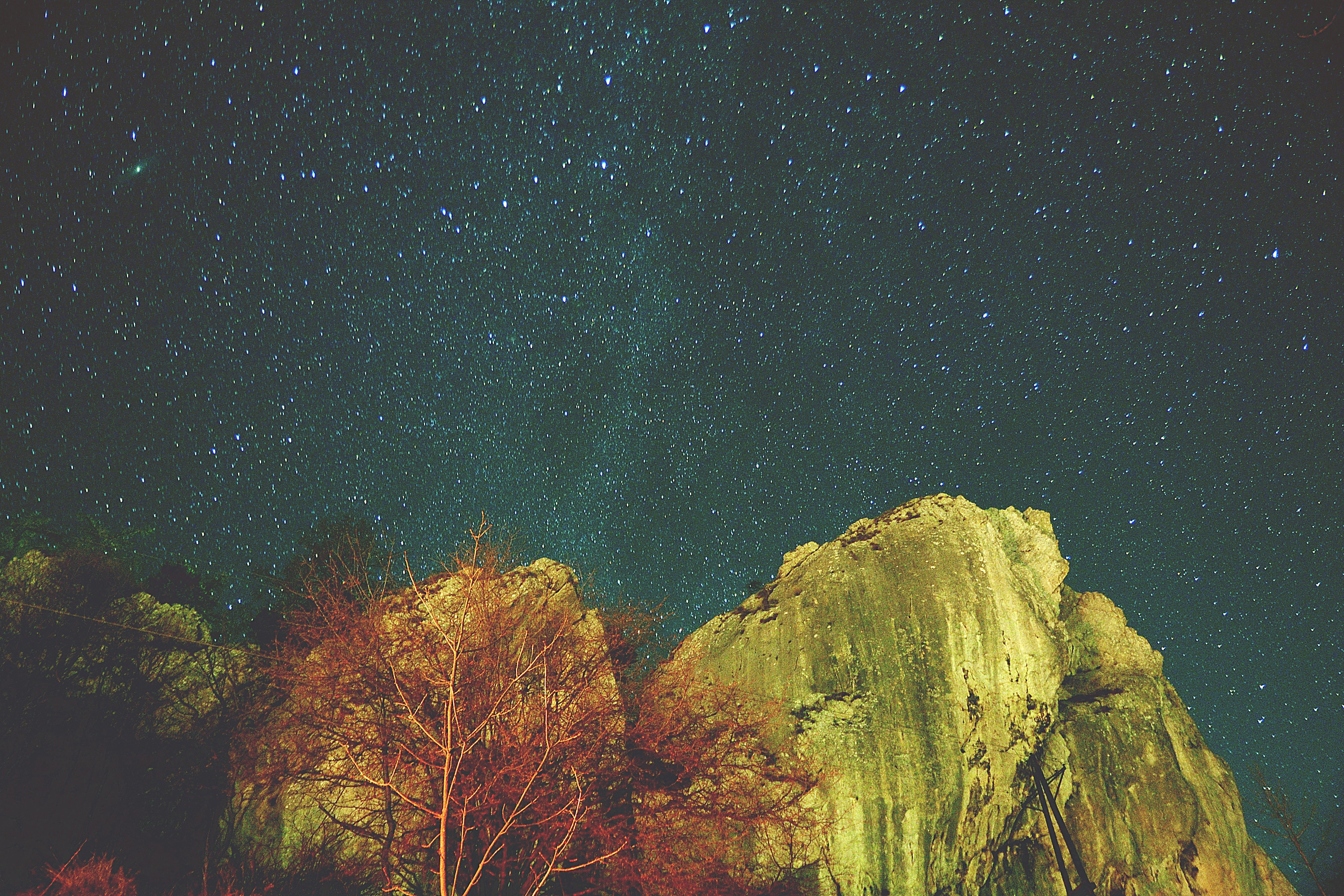 Rock formations next to a red tree with a night sky illuminated with stars