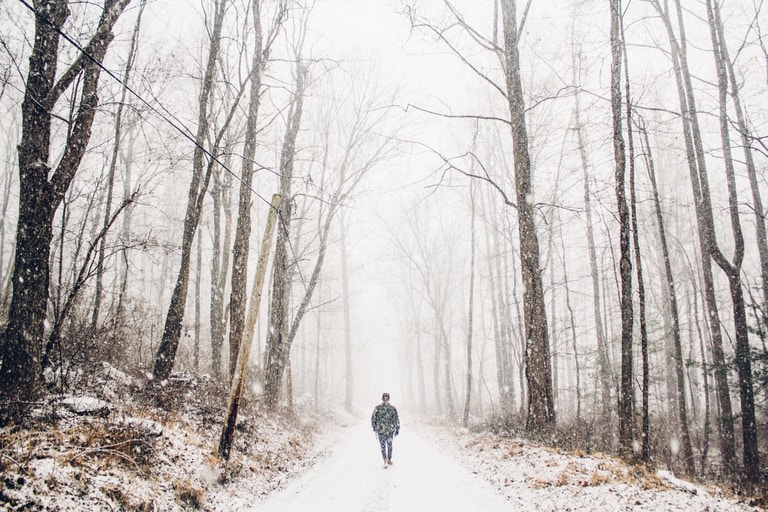 person walking on pathway between tall trees