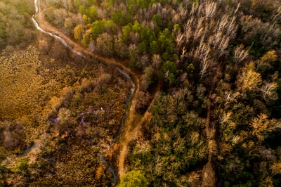 bird's-eye view photography of trees alabama zoom background