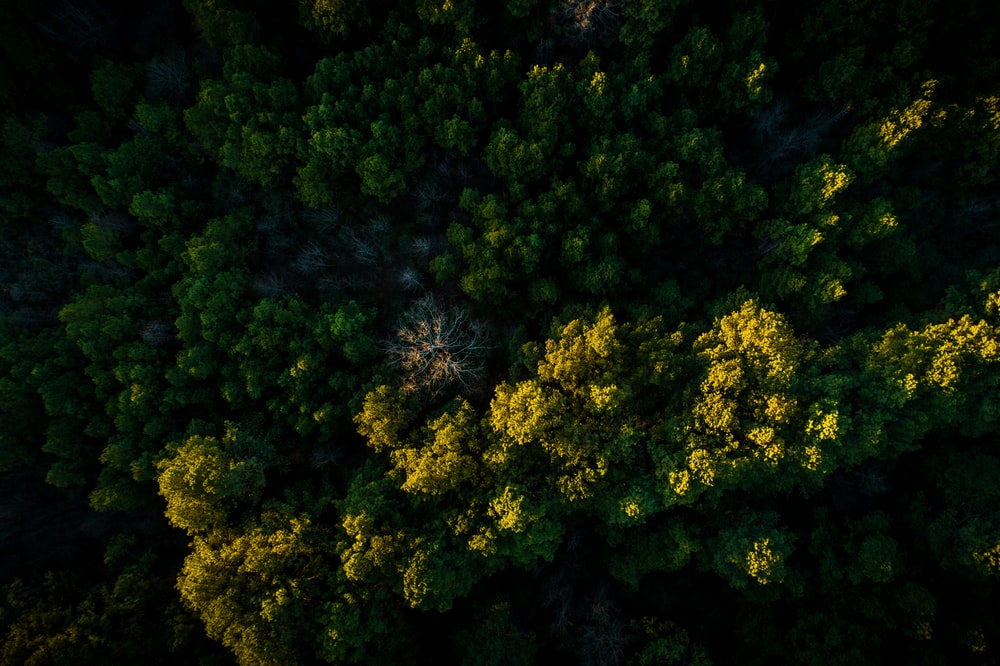 high angle photo of green trees