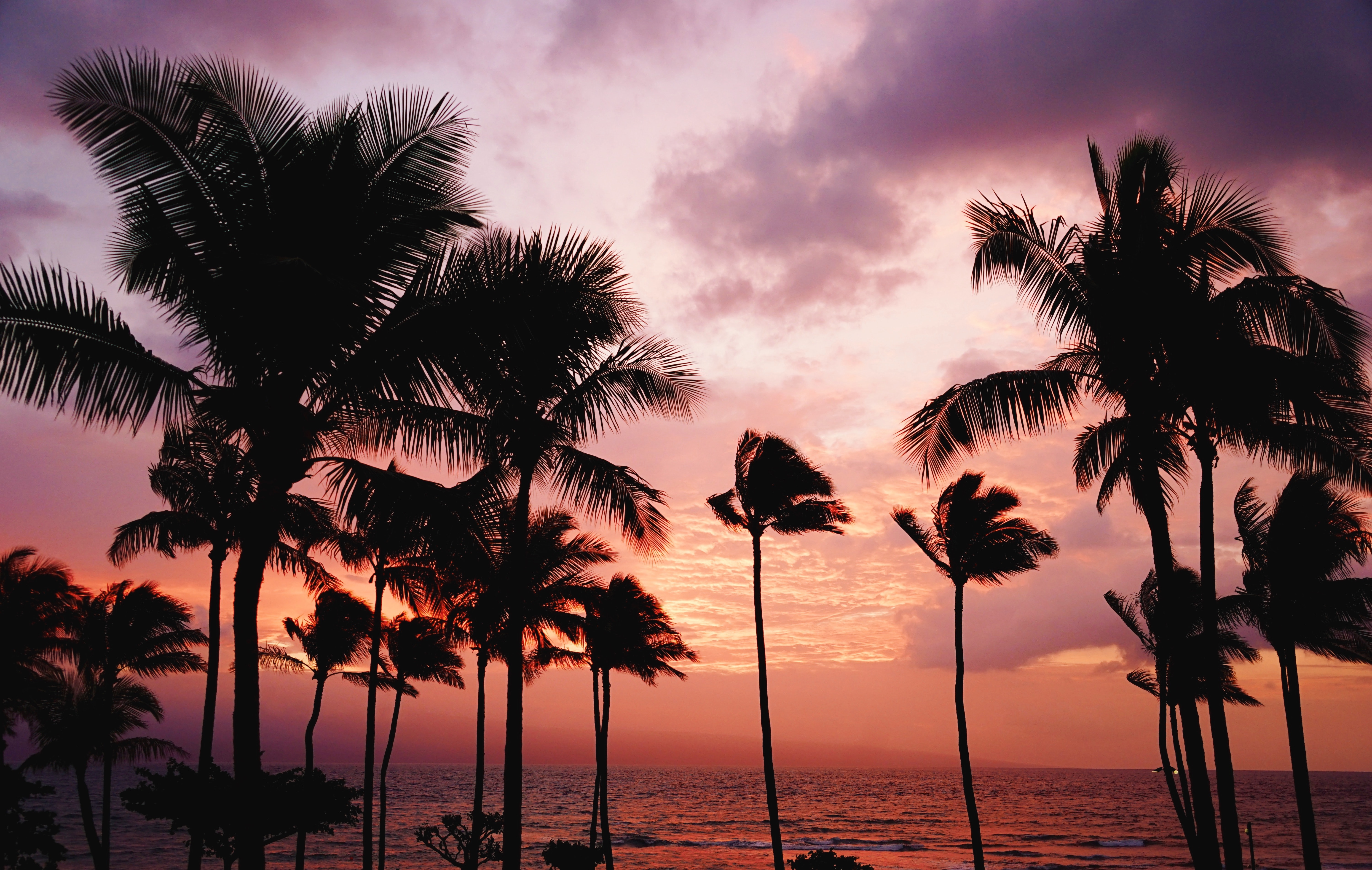 Palm trees swaying in the wind with a purple and orange sunset sky over the ocean in the distance, Maui County