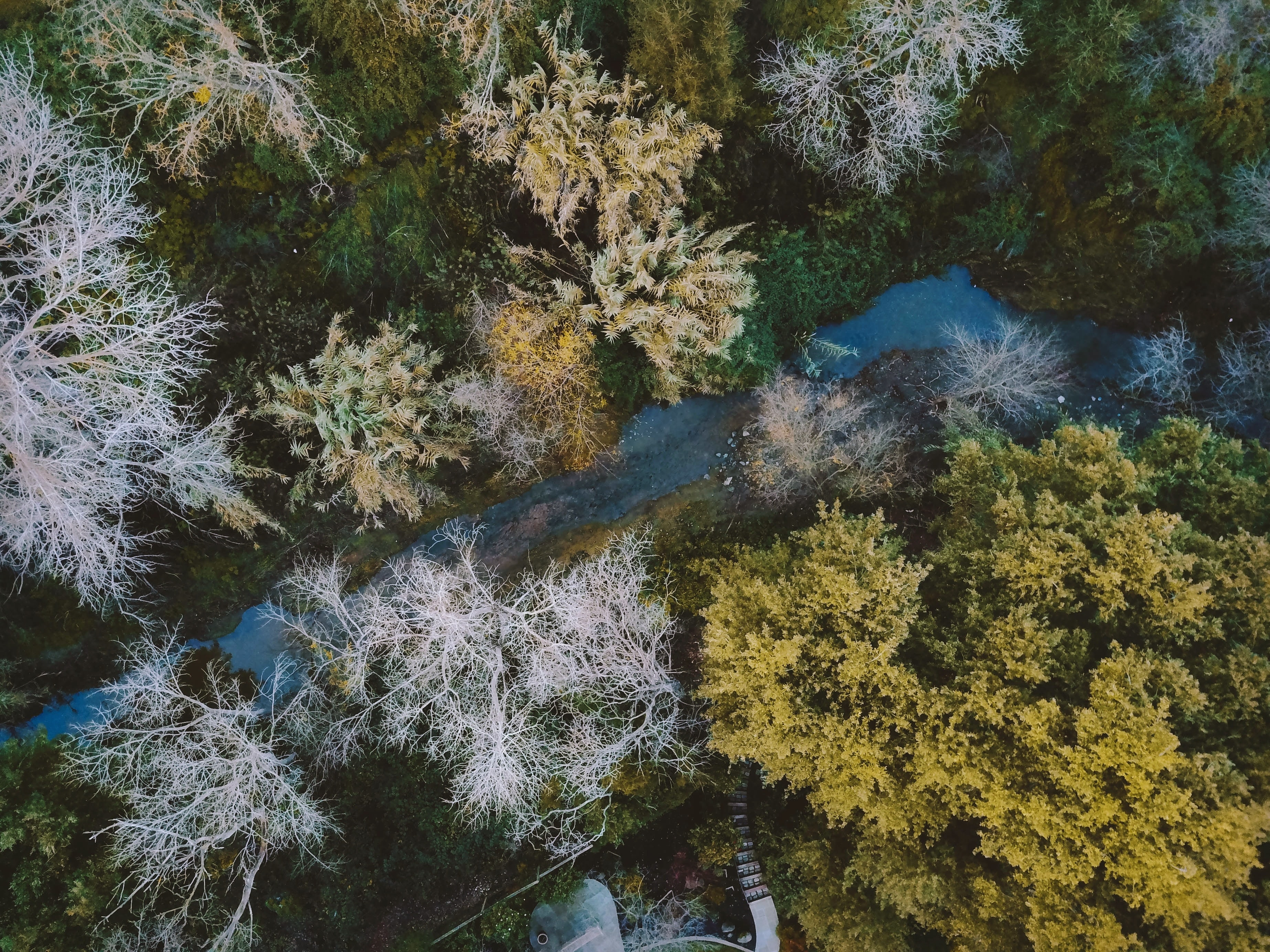 A drone shot of a forest with wispy trees around a small stream