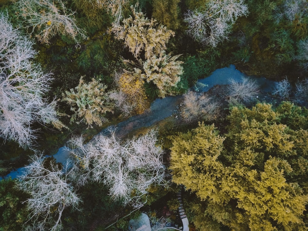 bird's eye view photo of river flow between tall trees during daytime