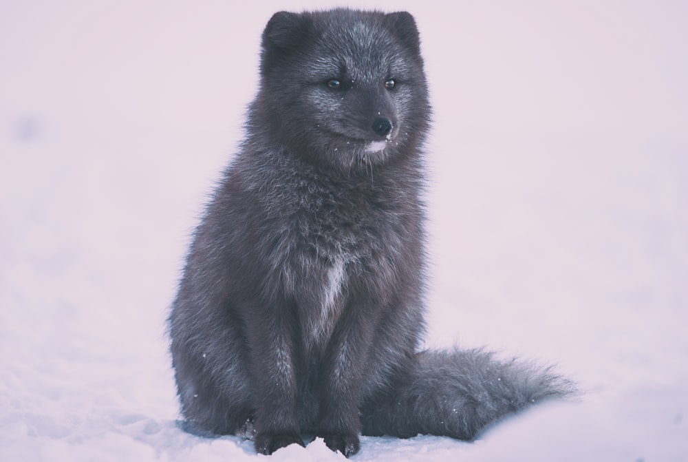 black 4-legged animal on white surface