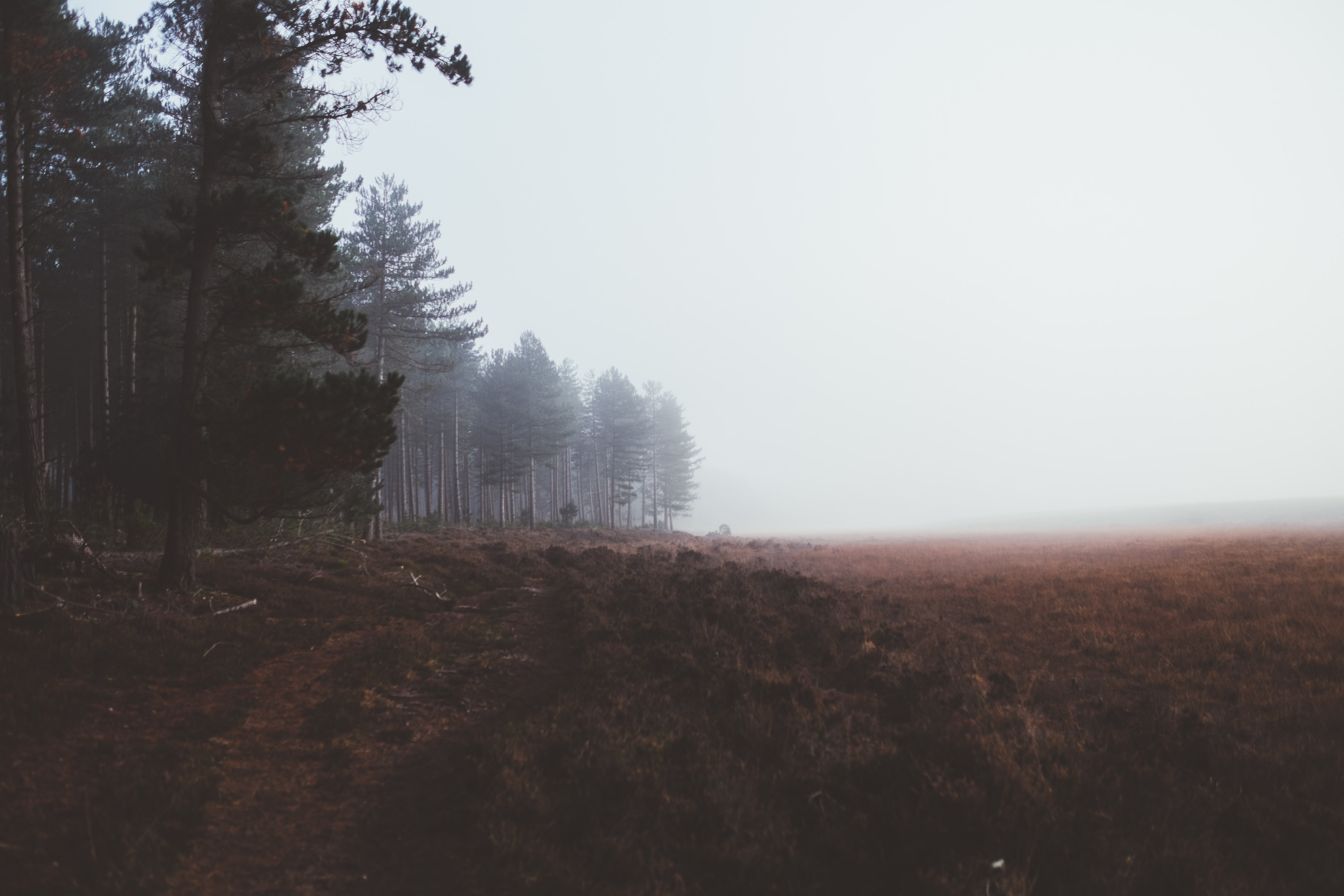 A brown field at the edge of an evergreen forest in New Forest National Park