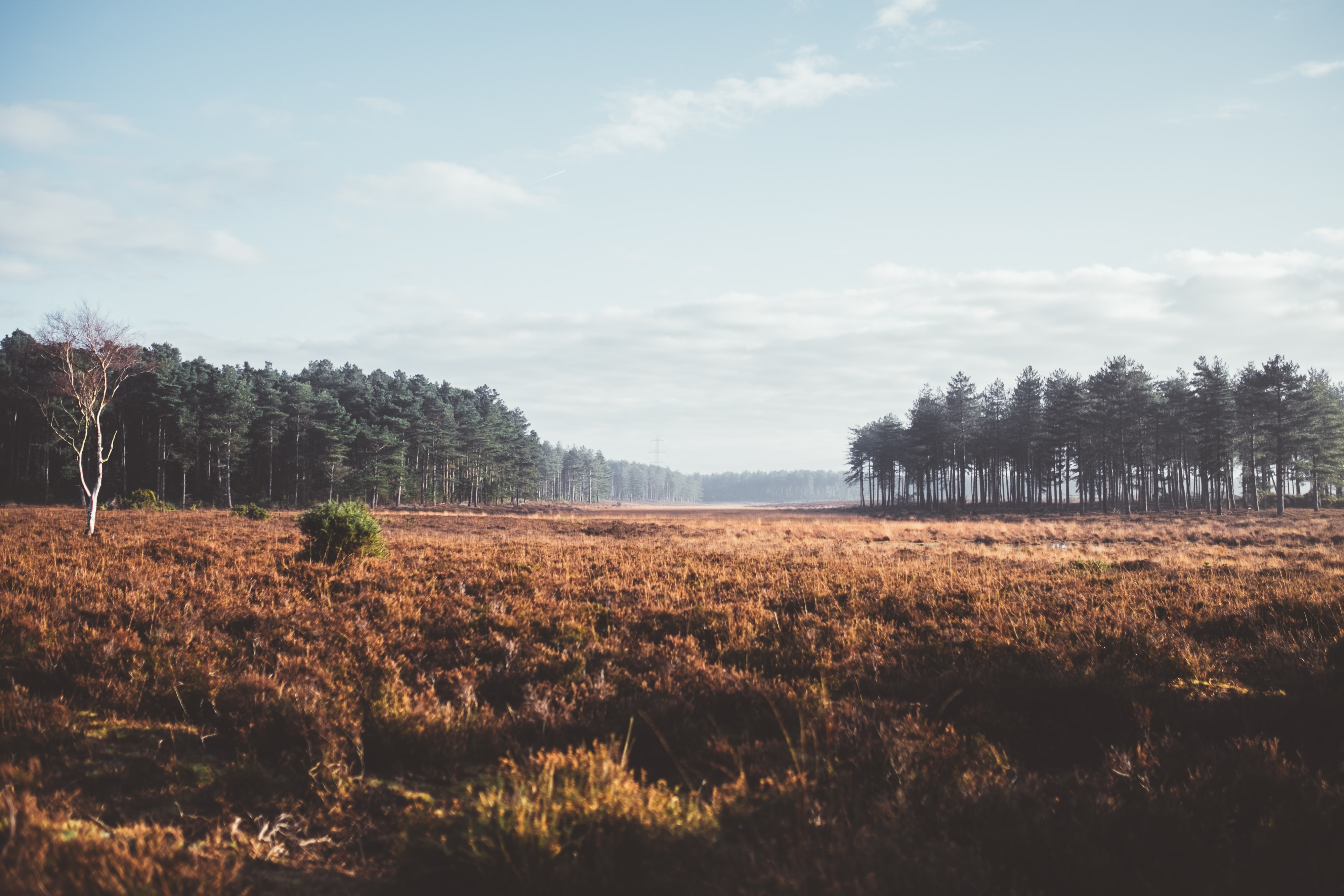 A brown meadow near a coniferous forest in New Forest District