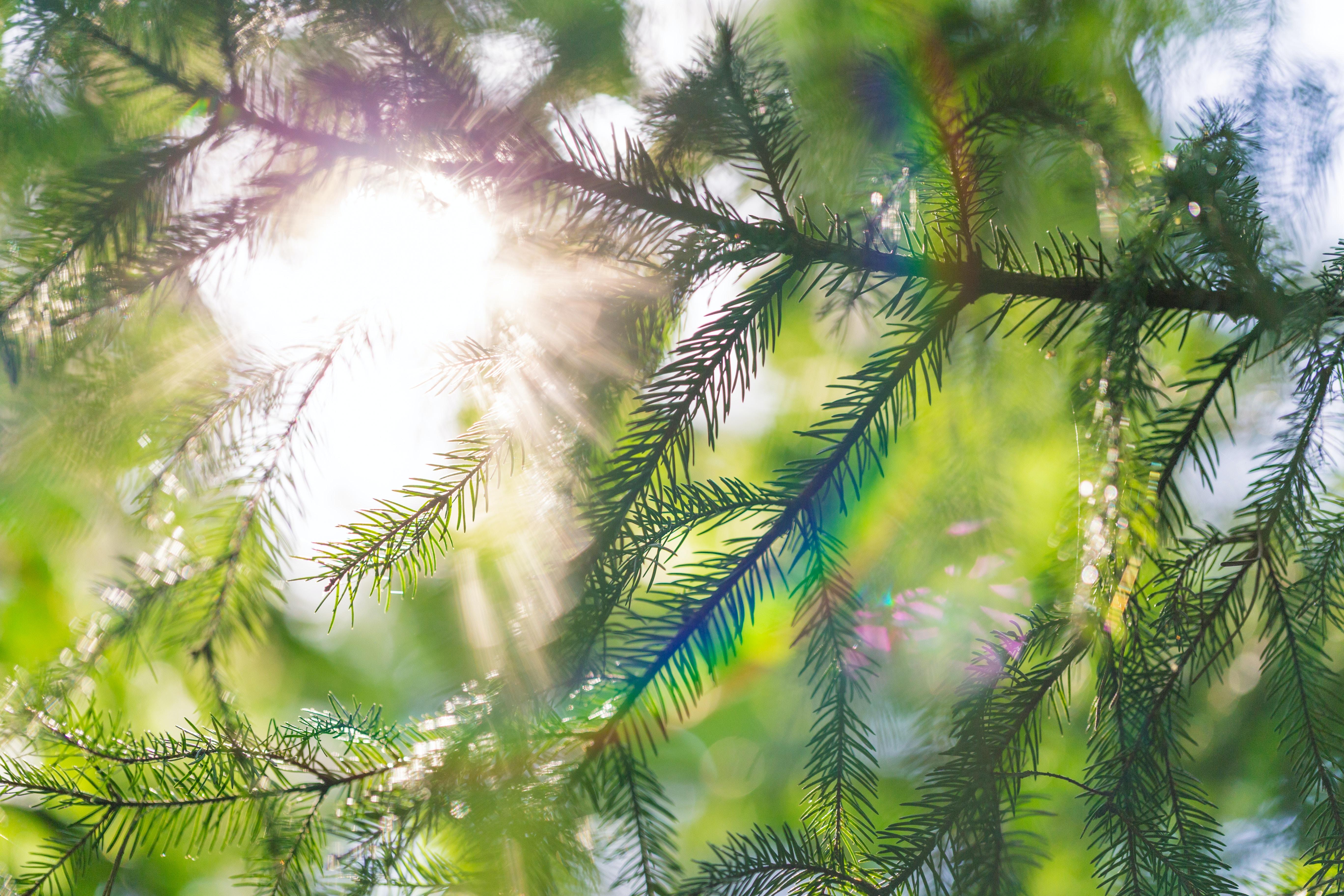 closeup photo of green fern