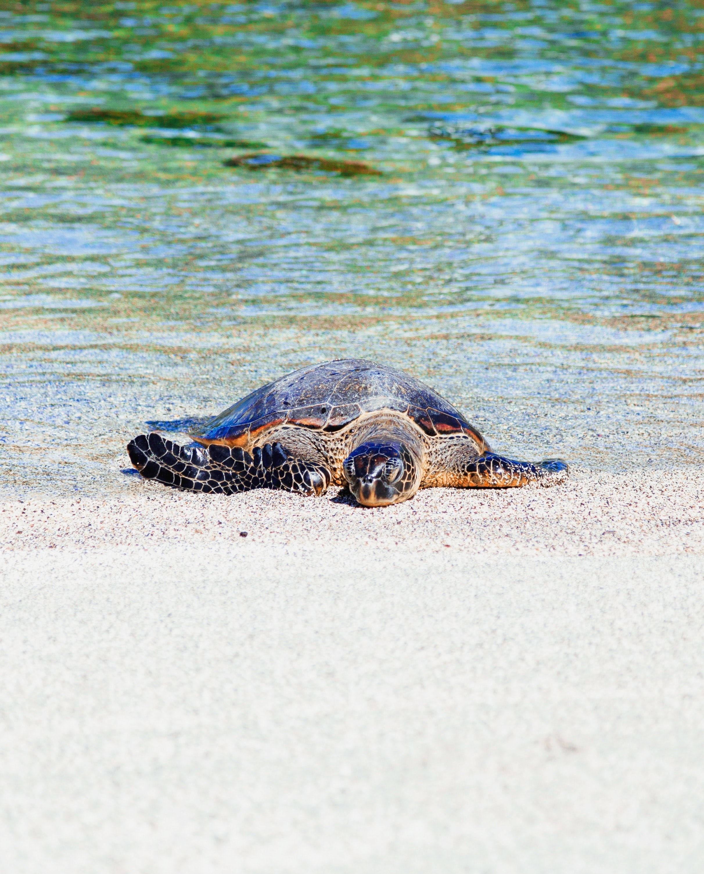 brown turtle on seashore