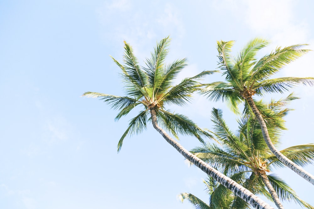 green coconut trees during daytime