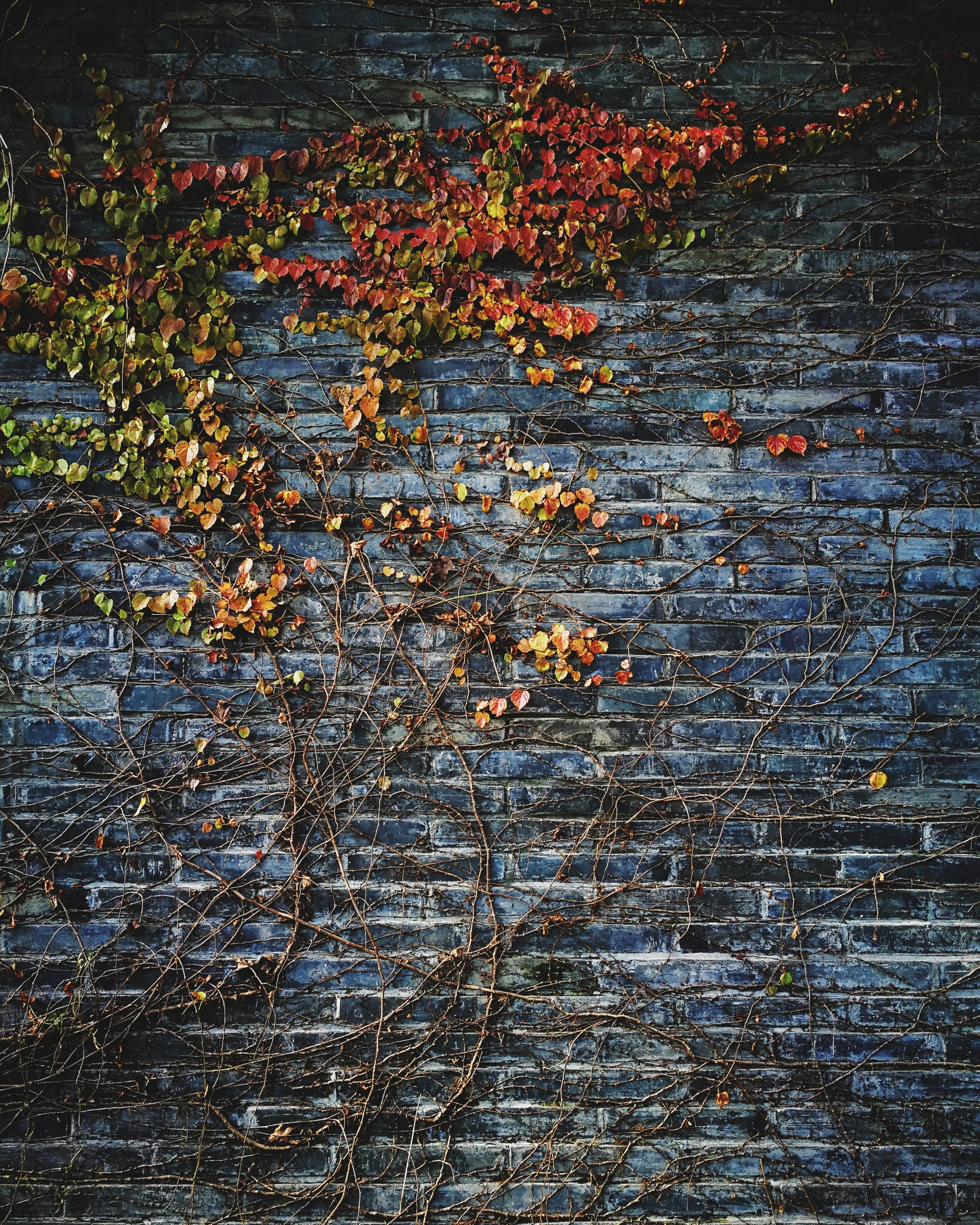 green leafed plant on wall