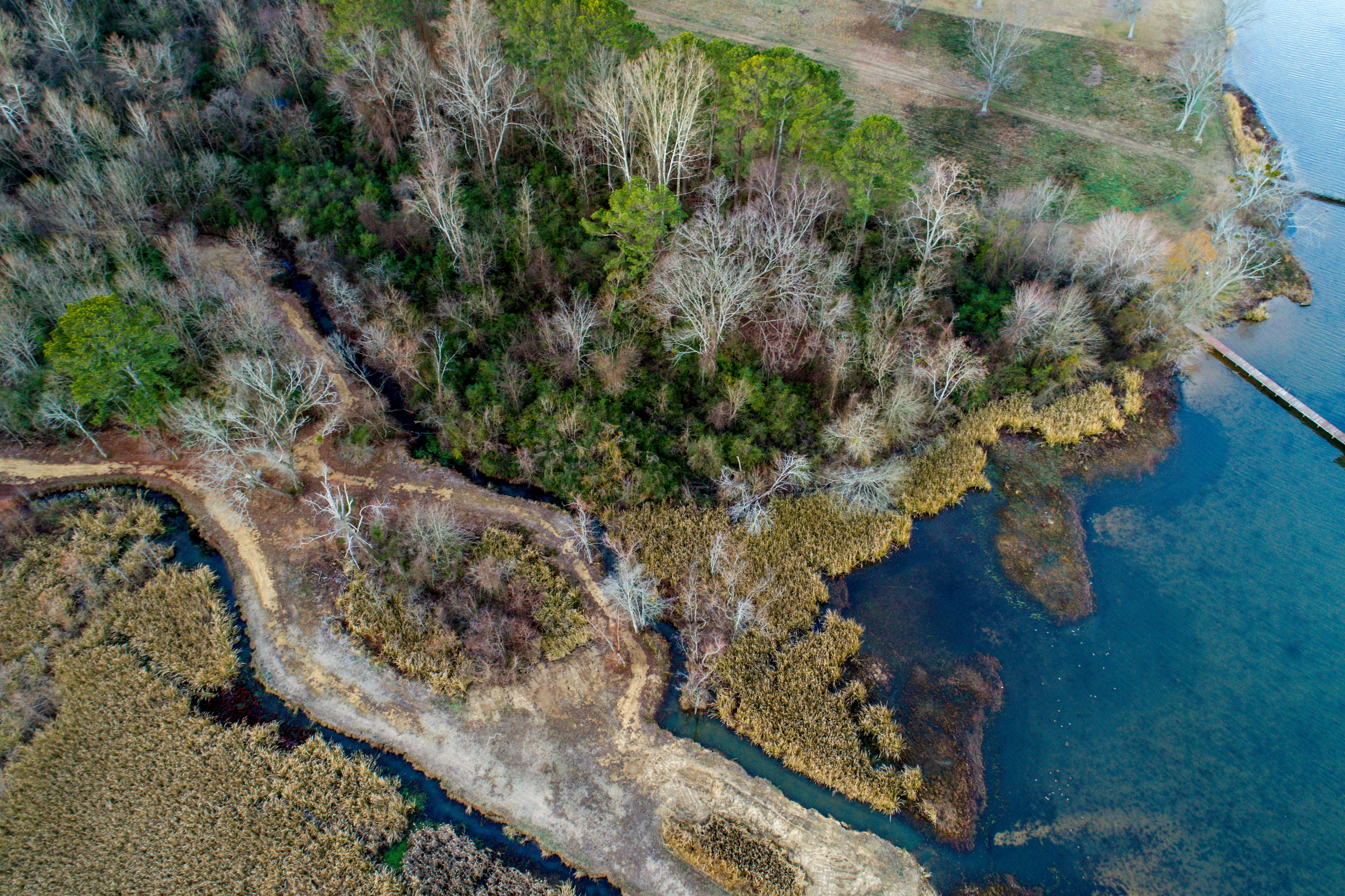 A drone shot of a picturesque stretch of forest near a lake in Guntersville, Alabama