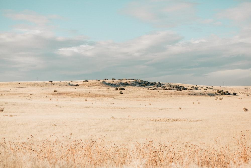 landscape photo of grass field
