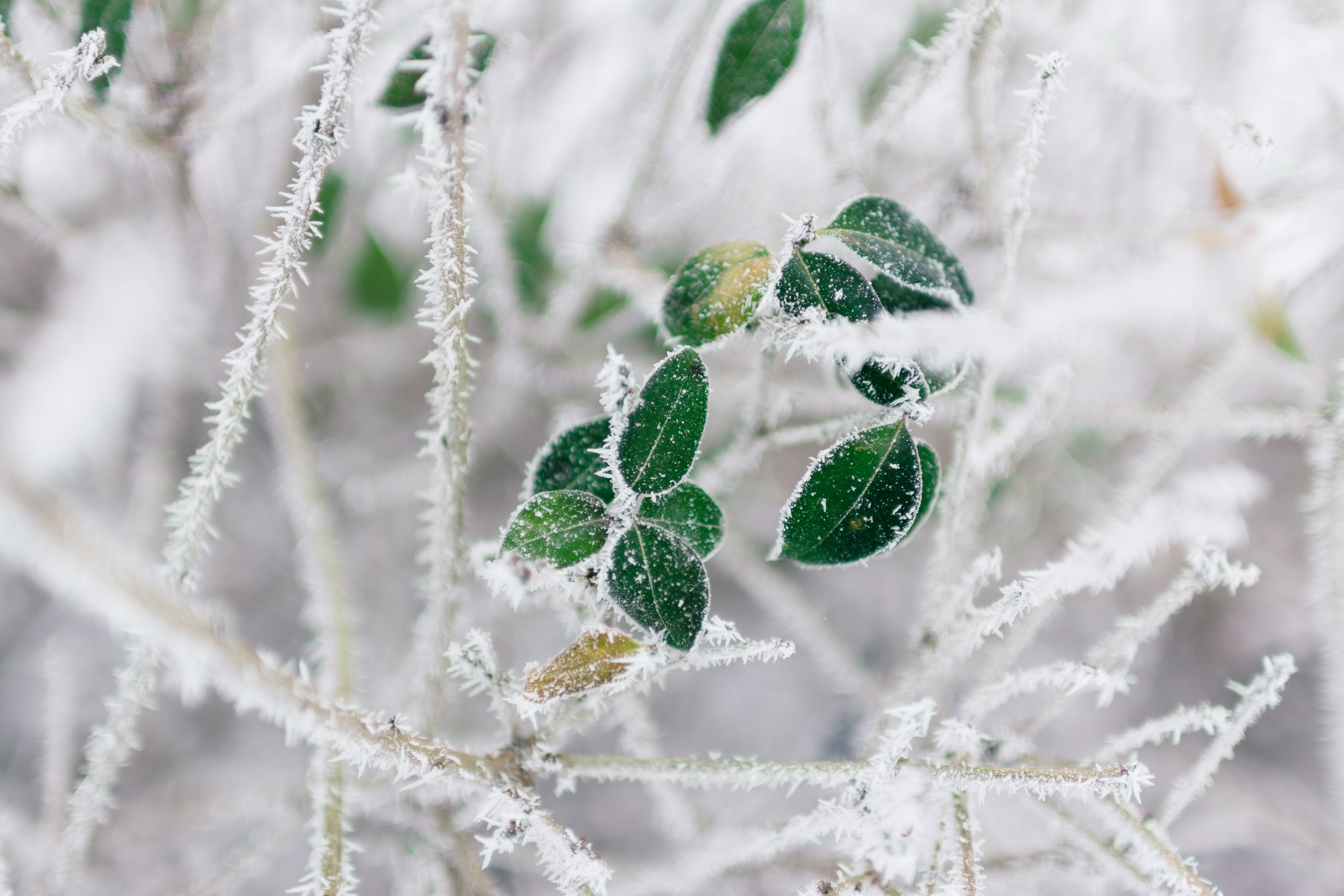 selective focus of frozen leaves
