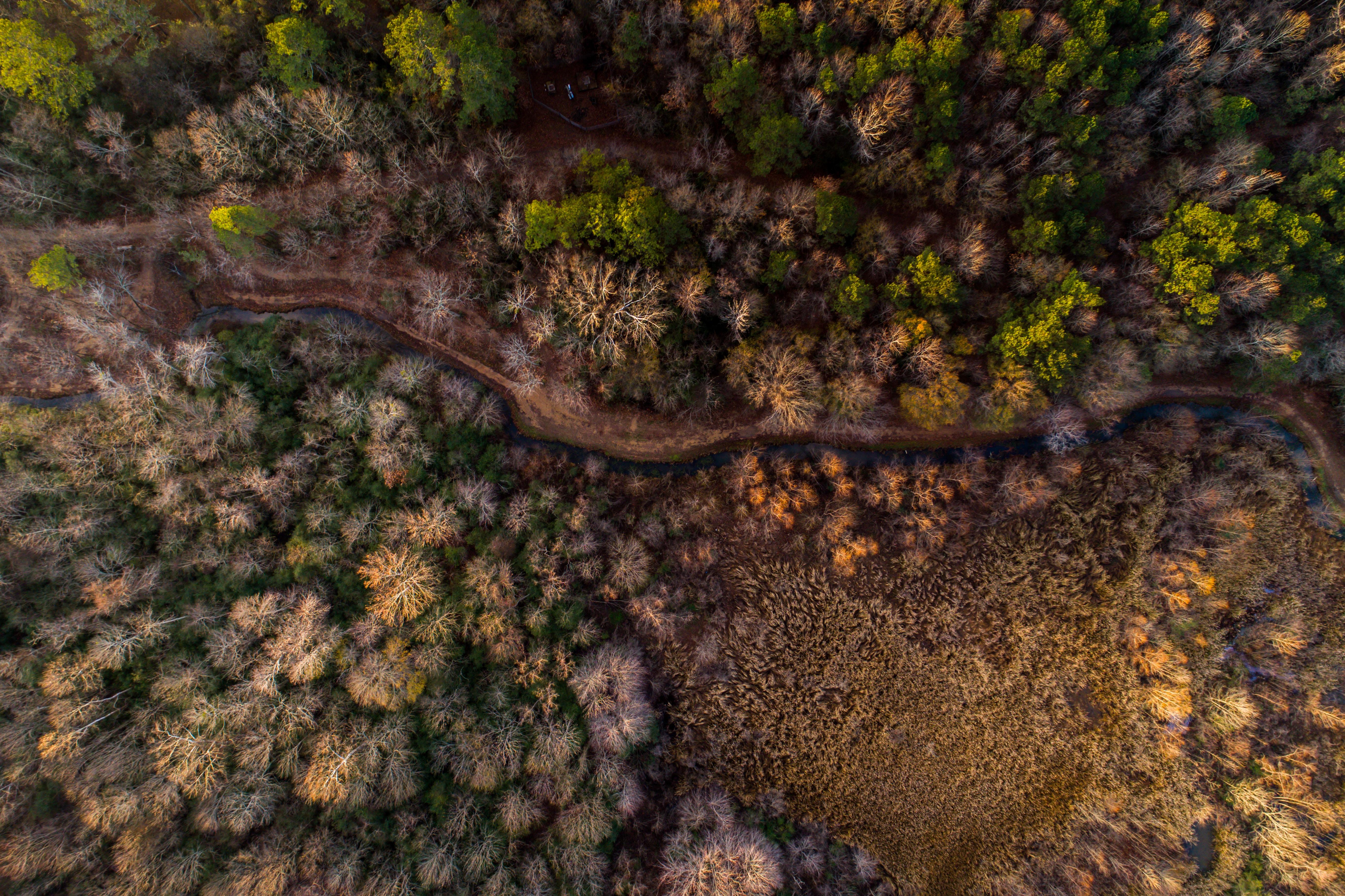 An aerial shot of a blue creek running through a diverse forest