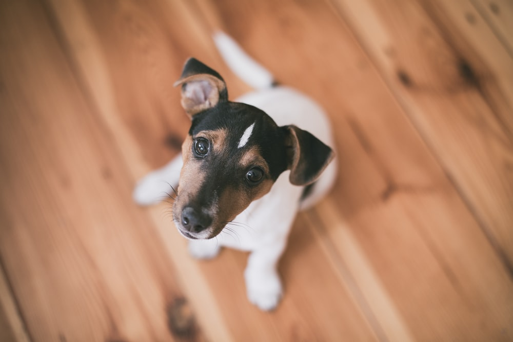 shallow focus photography of short-coated white and brown puppy sit