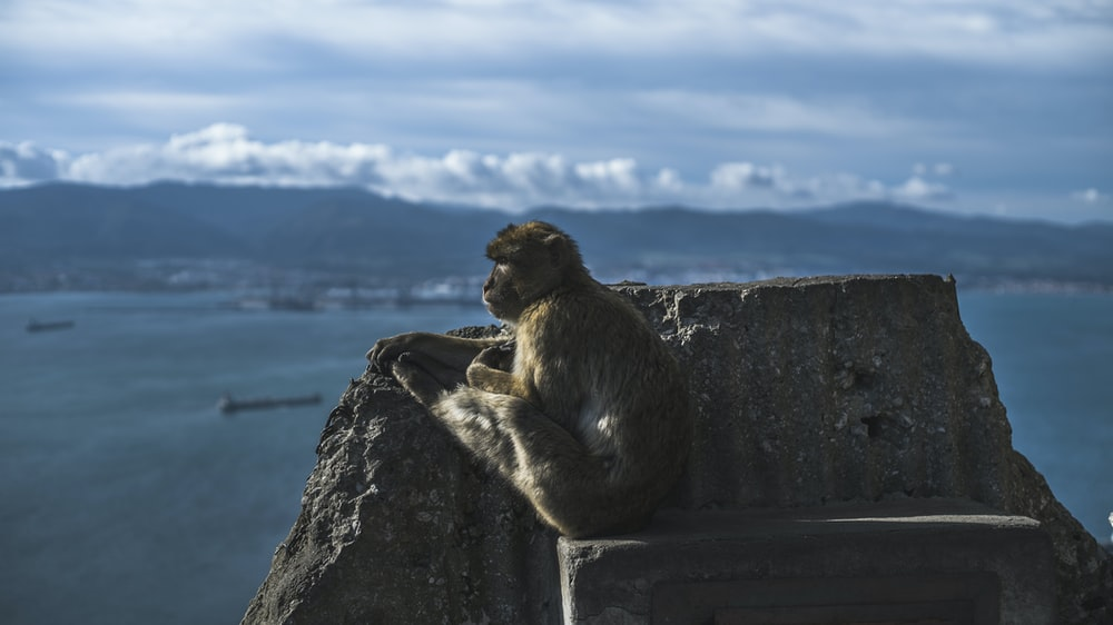 brown monkey sitting on rock formation near body of water under cloudy sky