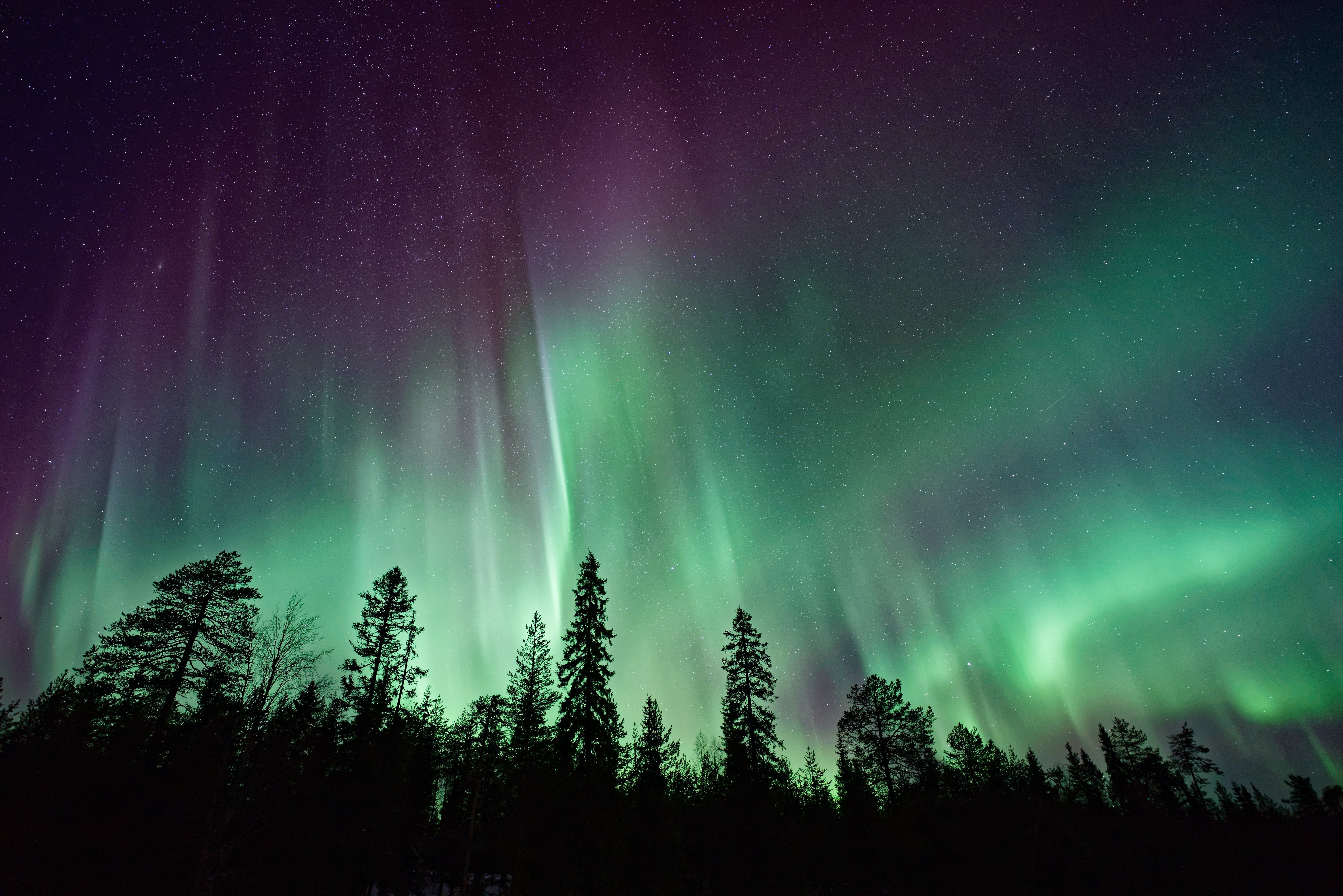 Aurora borealis on a night sky over silhouettes of trees