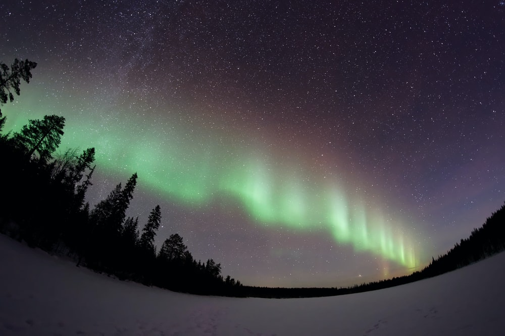 worm's eye view of aurora over tall trees