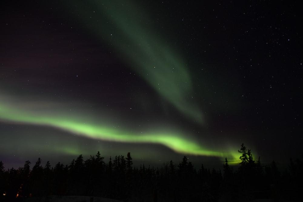silhouette of trees under green aurora