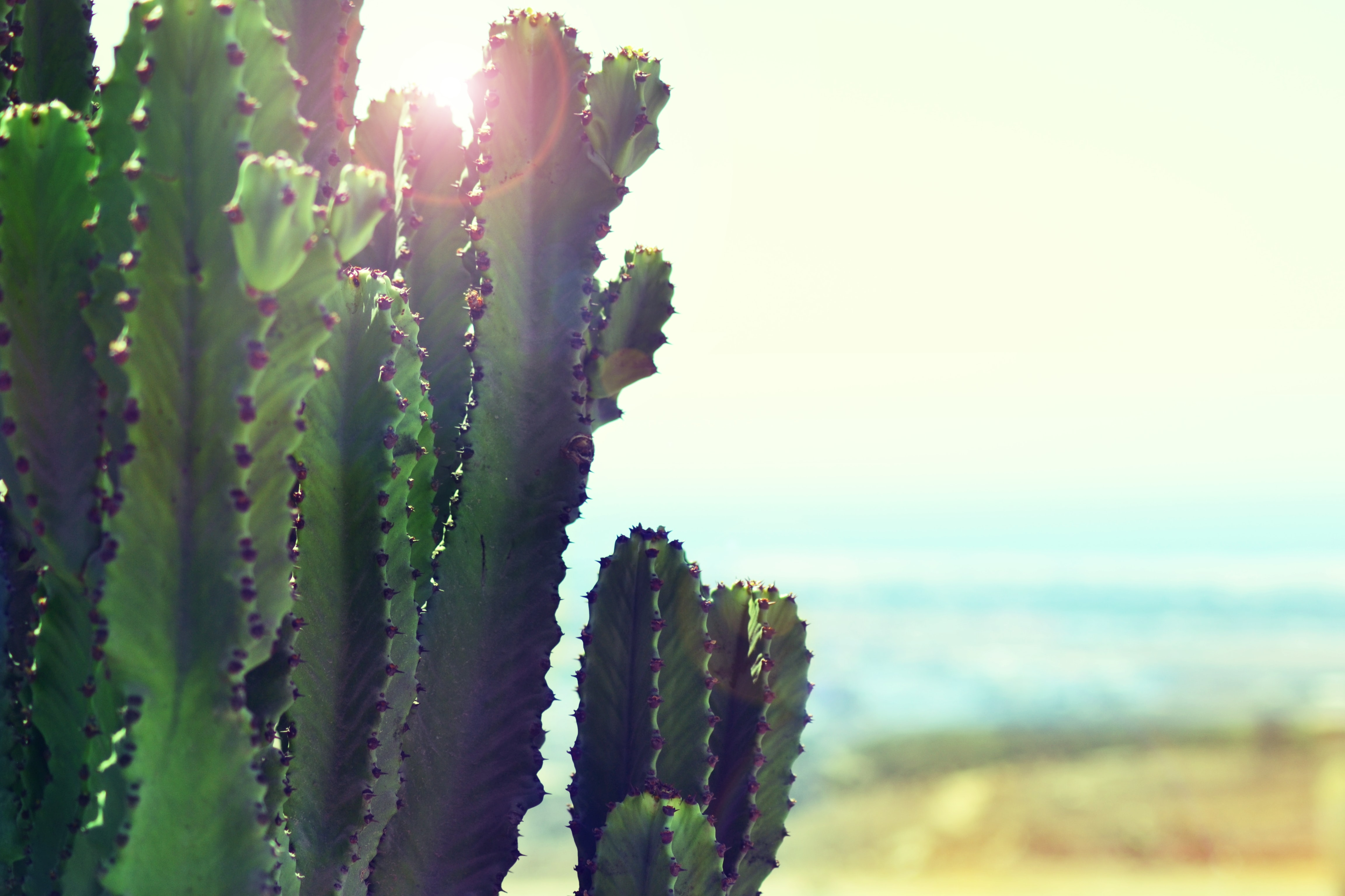 Cactus catches sunlight on a hot day in the desert