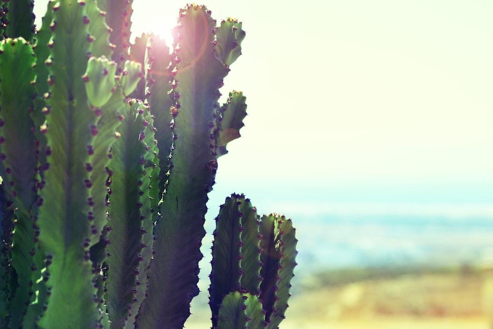 cacti near ocean during daytime