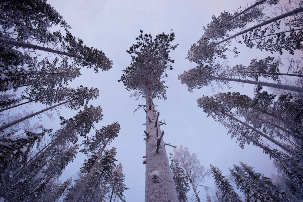 worm's eye-view of forest