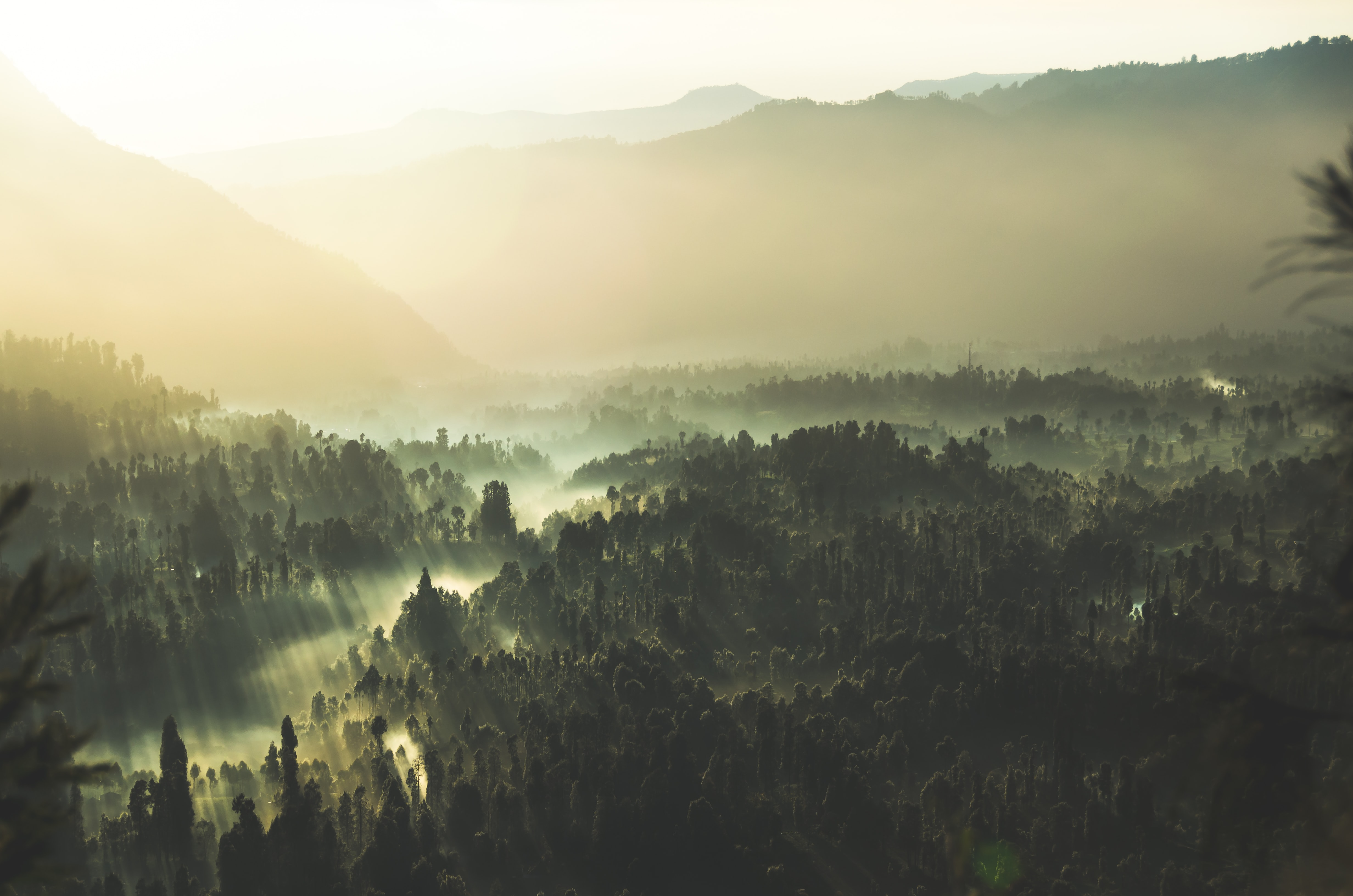 Rays of sun shining through the fog onto the trees of the Bromo Tengger Semeru National Park