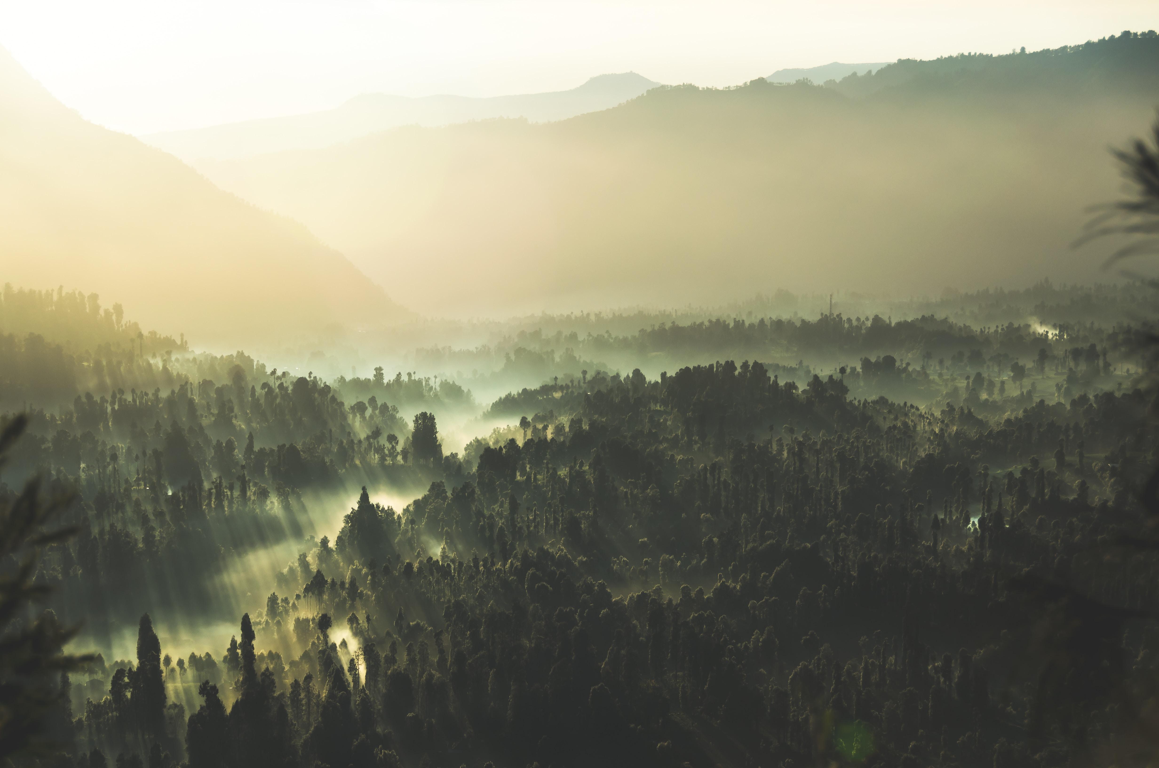 Rays of sun shining through the fog onto the trees of the Bromo Tengger Semeru National Park