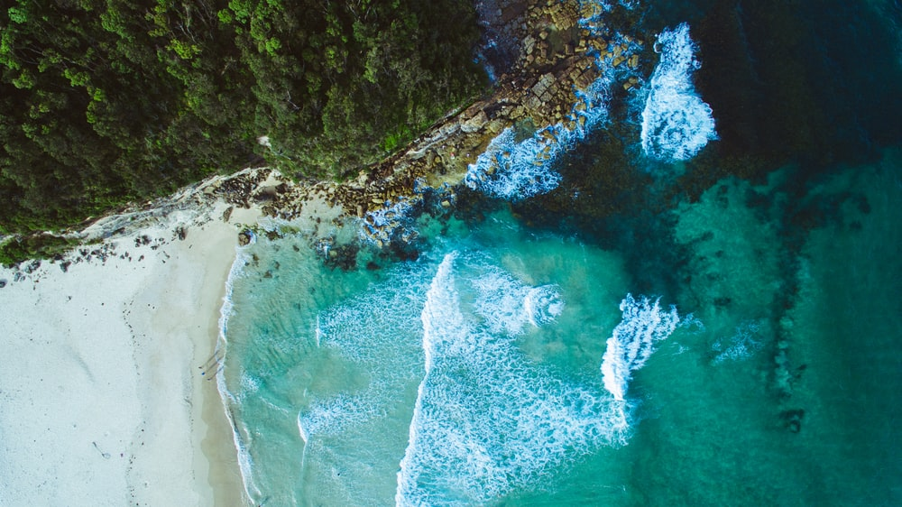 aerial photography of blue sea beside mountain with green tall trees